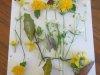 couleurs-du-printemps-Titouan